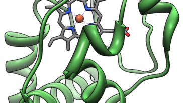Cytochrome c، دليل وراثي على السلف المشترك - التشابه الملحوظ بين الجينات كلية الوجود أو واسعة الانتشار لأنواع مختلفة من الأحياء